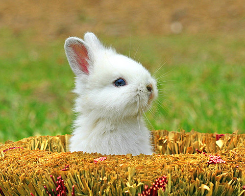 cute bunny photographs