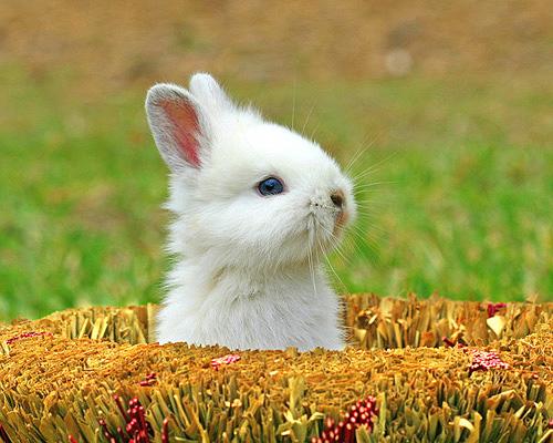 cute bunny photographs
